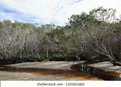 Stand of native gum trees and grasses next to a fast-moving sandy-bottomed creek whose clear waters are stained with leaf tannins.