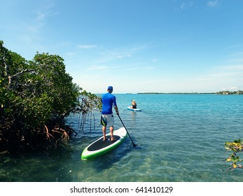 Stand up paddle boarding in the mangroves of the Belize Barrier Reef