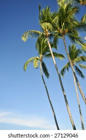 Stand of palm trees against a blue sky on a Mexico beach