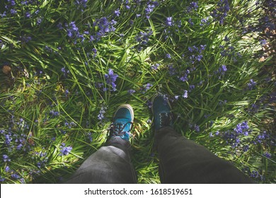 Standing amongst bluebells in bluebell woods in Dinefwr, National Trust park in Wales.