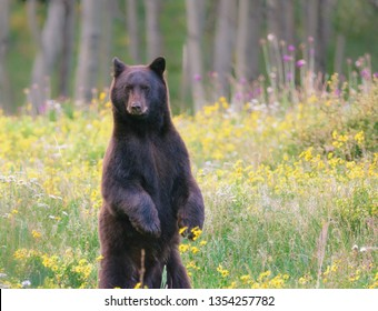 Standing Bear looking at me