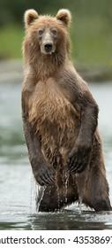 Standing Bear in water