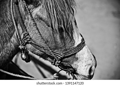 A standing horse unique black and white photo