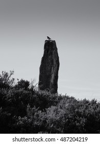 Standing Stone - The greenwood stone and bird