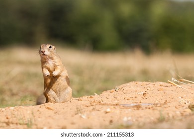 Standing and watching Gopher something