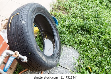 Standing water trapped in tire and containers in dirty environment breed mosquito