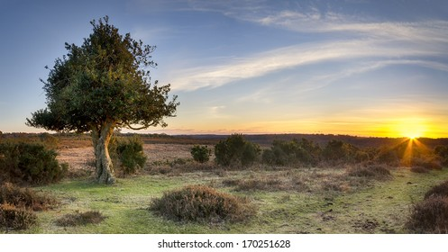 A Star burst of sunlight at Bratley View in the New Forest National Park in Hampshire