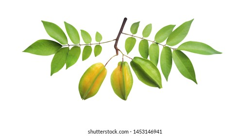 Star carambola or averrhoa carambola with stem and green leaves pattern isolated on white background with clipping path
