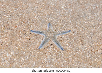 The star fish is living in sea and sand under the water.
