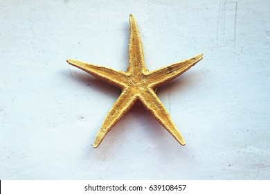 Star fish on background