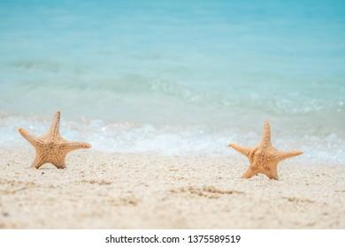 Star fish and sea shells on the sea shore, Styled faded retro tones