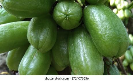 star fruit photo background image