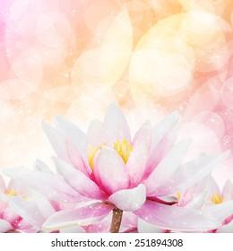 Star Glitter Lotus