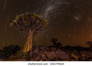 Star trail at Quivertree Forest, Keetmanshoop, Namibia, Southern Africa.