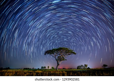 Star trails behind a alone tree in rice fields.with grain and select white balance.Photo by long exposure.