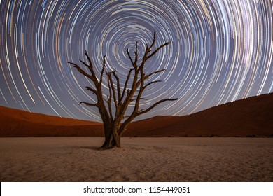 Star trails circle over a camelthorn tree in Deadvlie, Namibia