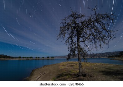 Star Trails with lonely tree during full moon at Lake Berryessa, California