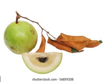 the star-apple fruit