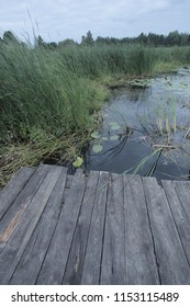 Załubice Stare, Poland, Europe - July 25, 2018: morning by Rządza river, wooden deck and green plans on a river shore, outdoors on a summer day