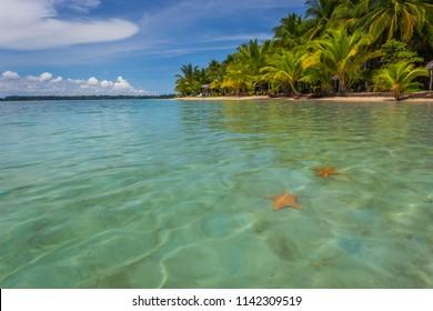 Starfish beach in bocas del toro, Panama, Central America