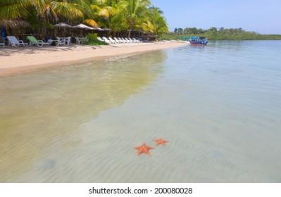 Starfish beach on the archipelago Bocas del Toro, Panama