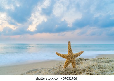 Starfish at the beach at sunrise long exposure