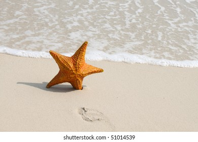 A starfish besides sea shore on a beach with white sand and water.