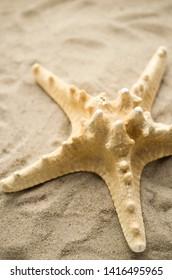Starfish by beach on sand