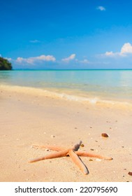 Starfish called Wanda Under the Sun