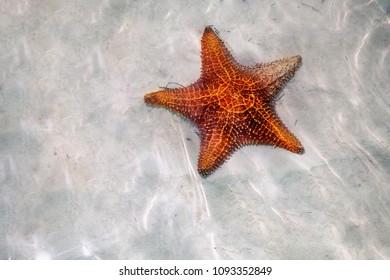 Starfish in Cayo Largo, Cuba