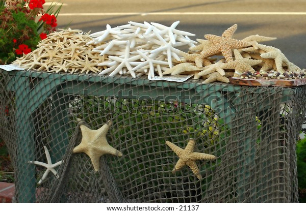 starfish display