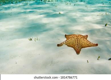 Starfish in el Cielo Cozumel underwater snorkeling
