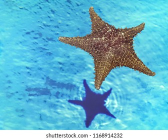 Starfish floating on water with its  double reflexion at the bottom . Stock Image