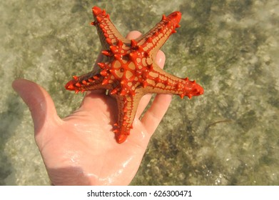 Starfish in a hand