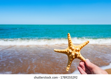 Starfish in hand on ocean background