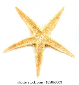 Starfish isolated in front of white background