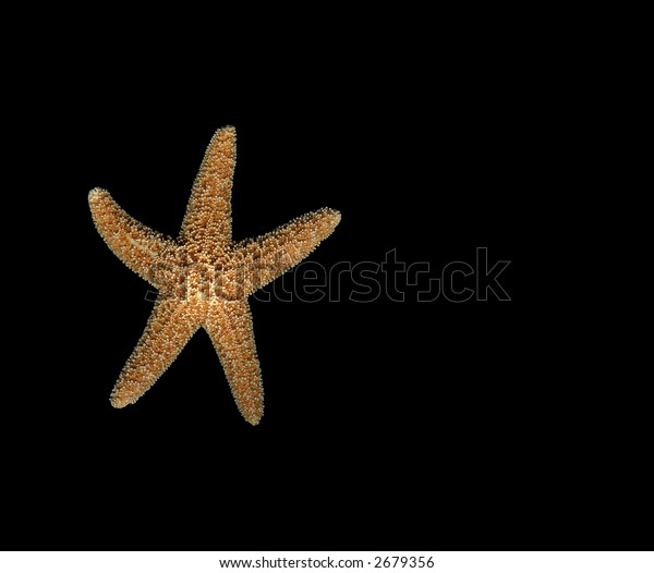 Starfish Isolated on Black Background