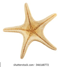 Starfish isolated on white background. Clipping Path