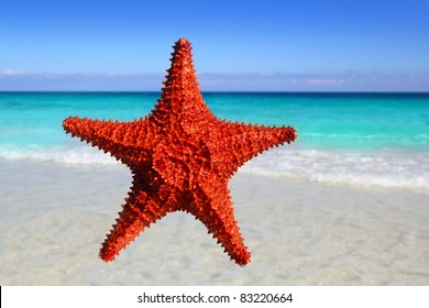 starfish isolated with a tropical turquoise beach background [Photo Illustration]