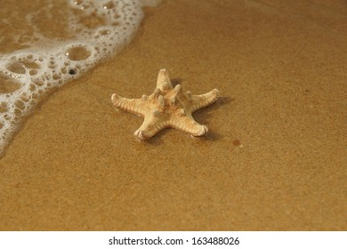 Starfish lay on sandy beach with waves lapping towards it