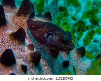 A starfish in Malapascua Island, Philippines