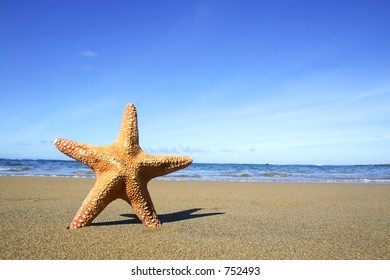 Starfish on the beach