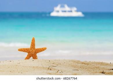 starfish on beach, blue sea and white boat, shallow dof