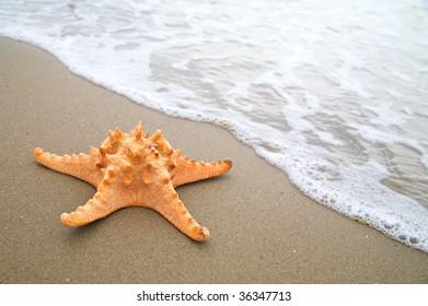 Starfish on the beach. Close-up
