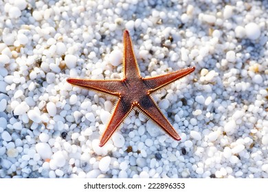 Starfish on a beach with natural white marble stones texture