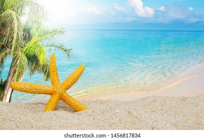 starfish on the beach with palm trees