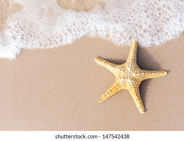 starfish on a beach sand. Space for Your text on sand