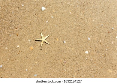 Starfish on beach sand. Travel and tourism. Copy space, flat lay style. Wildlife natural background