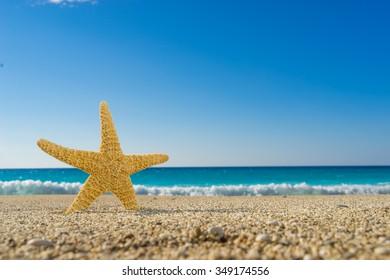 Starfish on the beach on a sunny day