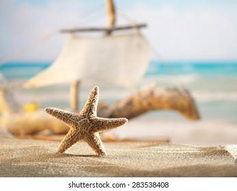 Starfish on the beach at sunrise
